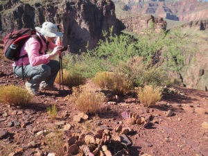 Nikki Photograhs a cactus