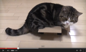 Maru in a Box