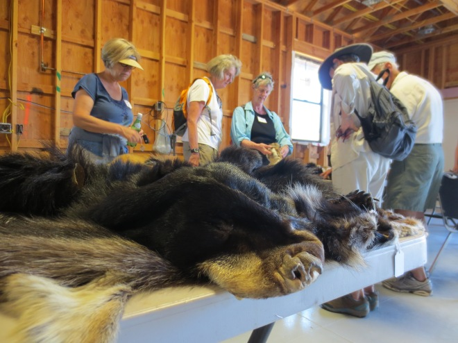 The people who chose not to go on the nature walk enjoyed a barn full of animal furs.