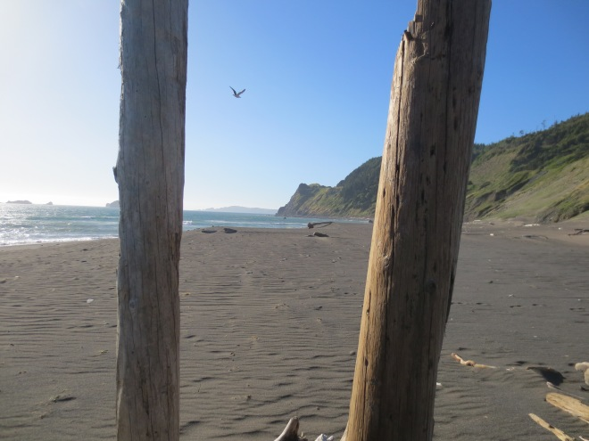 This was the view just 200 meters from my campsite near Humbug Mountain. I was the only one on the beach.