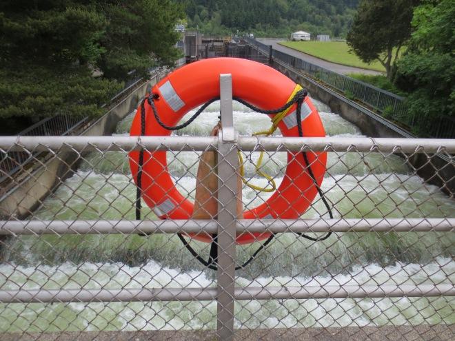 The salmon ladder at Bonneville Dam
