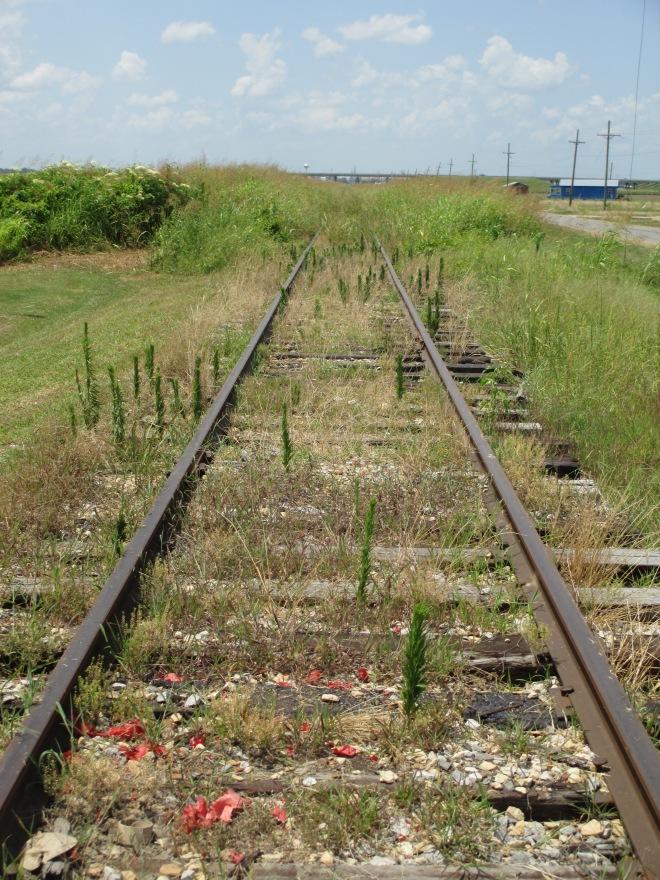 Tracks into Grass