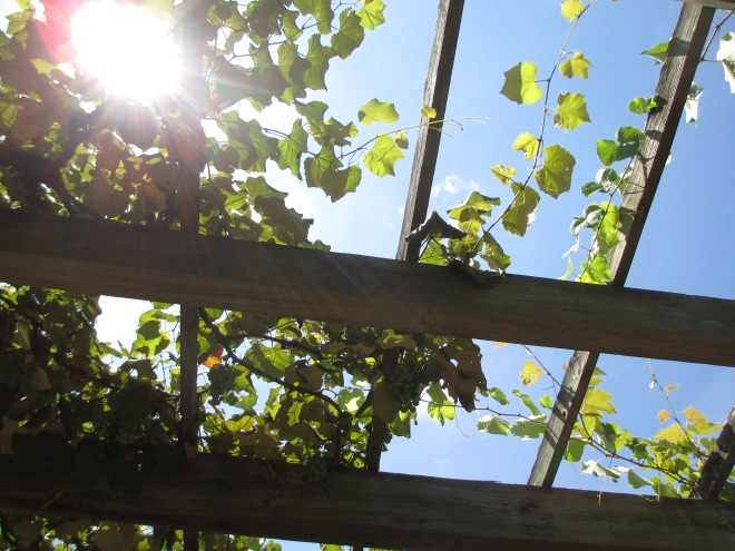 Sun through Trellis